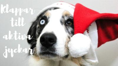 En hund i närbild så att man bara ser ansiktet. Hunden har ett brunt och ett blått öga. På huvudet har hunden en tomteluva. Artikeln handlar om julklappar till aktiva hundar.