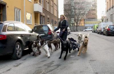 Löptur med Åtta hundar