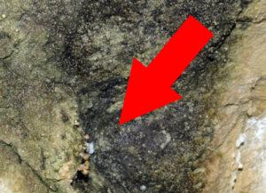 Här finns gruvdvärgspindeln