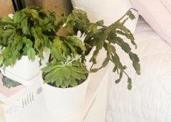 Gröna suckulenter (tjockbladiga växter) på ett sängbord.