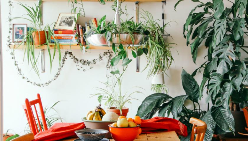 ett rum med gröna växter